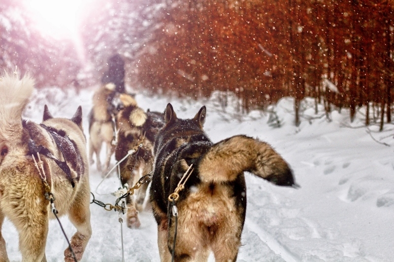 Pulling the Sled with Story: Team Writing